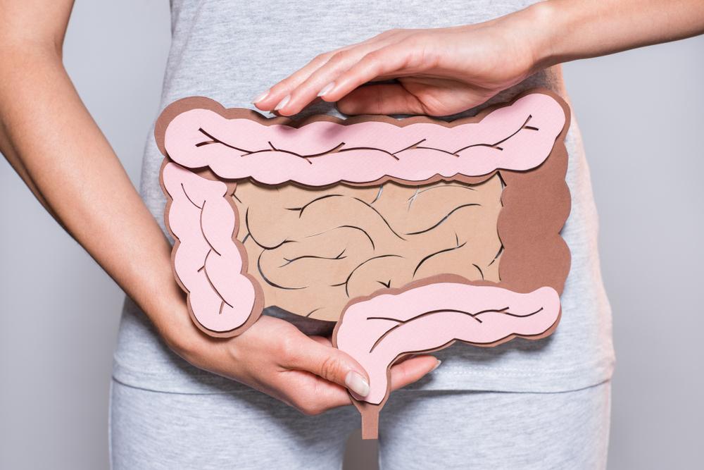 humain Intestine lengths
