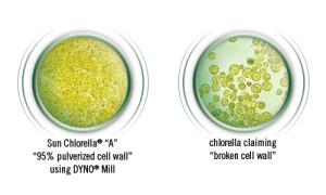 Chlorella-Cell-Wall